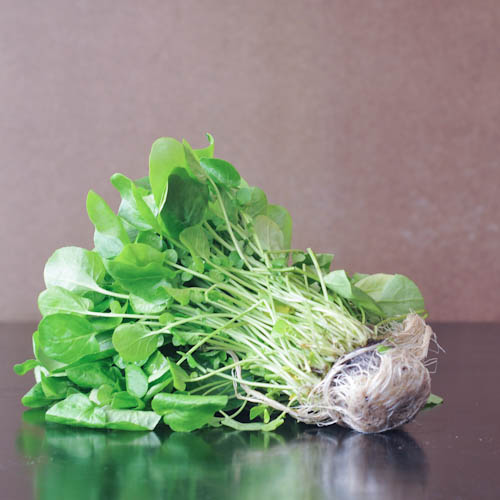 Salad of Living Watercress