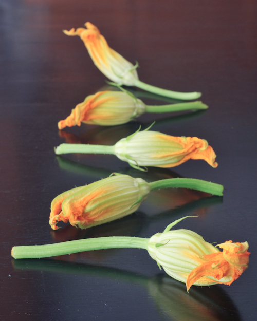 fresh squash blossoms spabettie