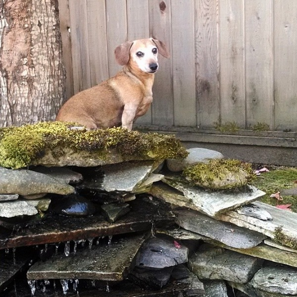 Basil Pup